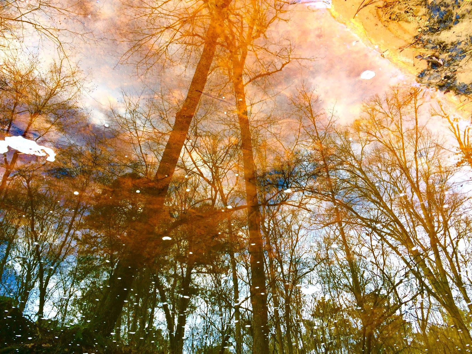 Winter Reflections in Umstead State Park by Arianne Hemlein